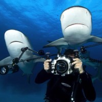 Photographer and sharks